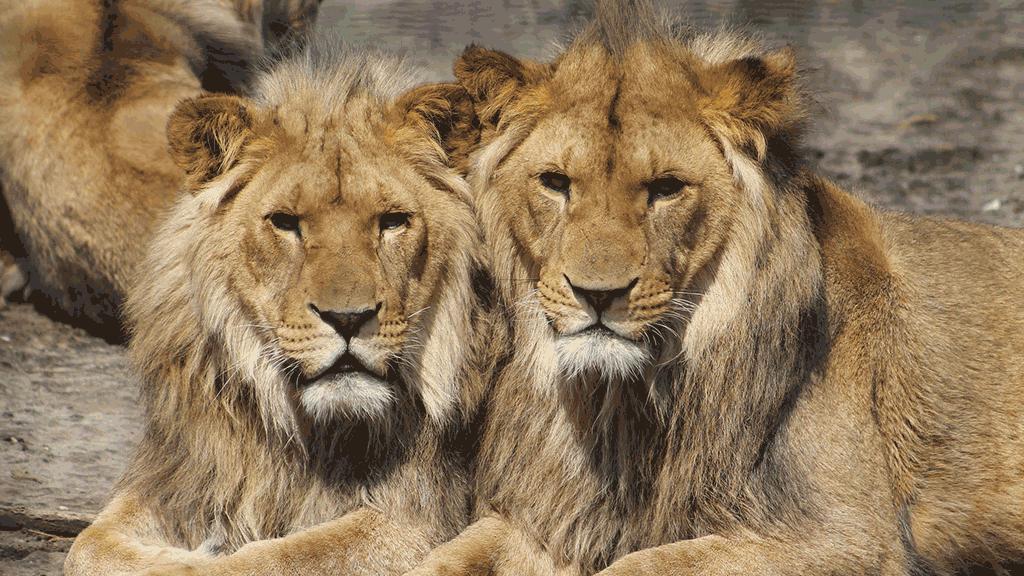 Passeusedesens_Trucs&Tips_PowerPoint_donneees_alertes_vifs_lions